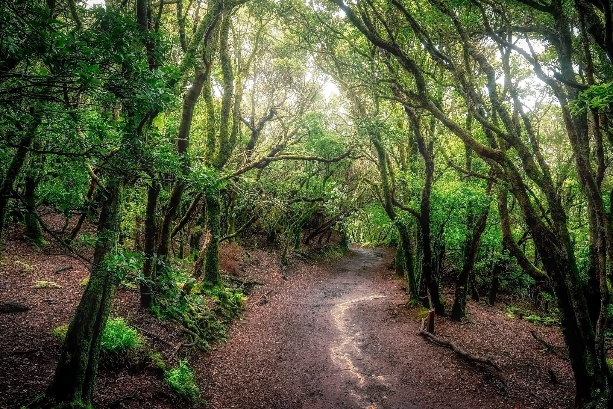 Parc Rural d'Anaga Tenerife